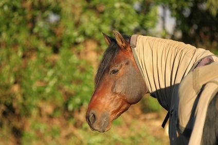 Ekzemerdecken schützen das Pferd vor Sonne und Ungeziefer