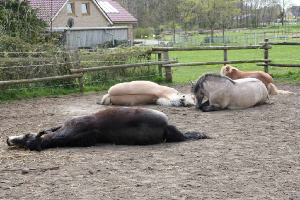 Eine gesunde Herde ist ausgeglichen und stressfrei.