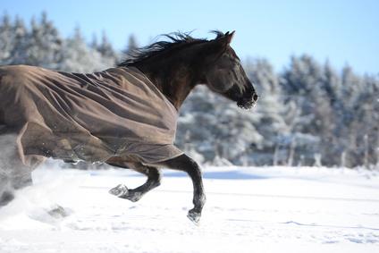 Thermodecken halten geschorene Pferde im Winter warm