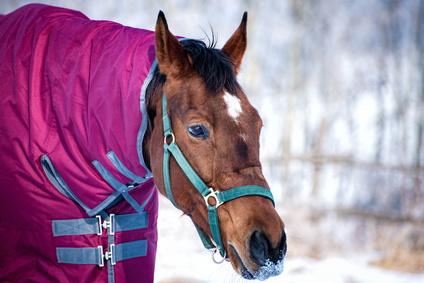 Pferdedecken sind in allen Trendfarben erhältlich