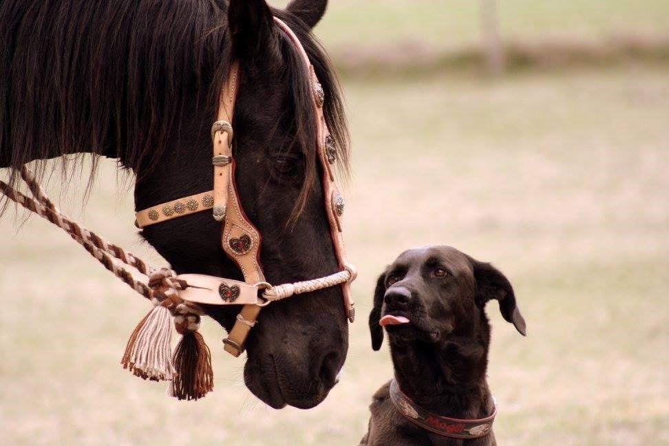 Reiten mit Hund, geht das überhaupt?