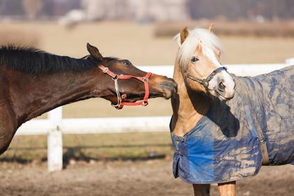 Beißattacken auf Decken – spezielle Sprays sollen das verhindern