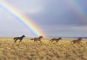 Pferdeinäscherung – wenn der beste Freund über den Regenbogen geht