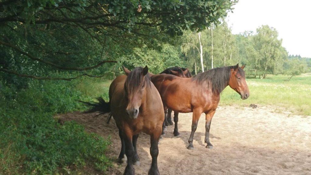 Pferde – Schützenswerte Freunde