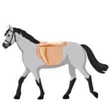 Sattelkissen für Pferde