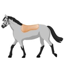 Sattelpads für Pferde